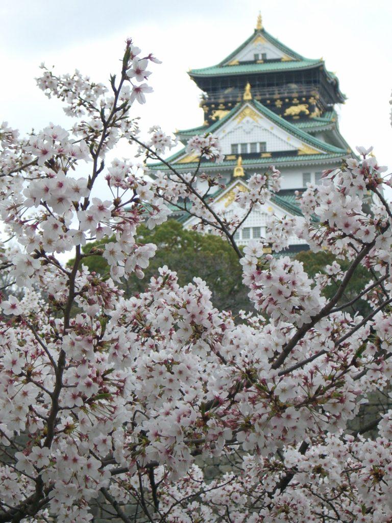 Château d'Osaka avec des cerisiers du Japon en premier plan